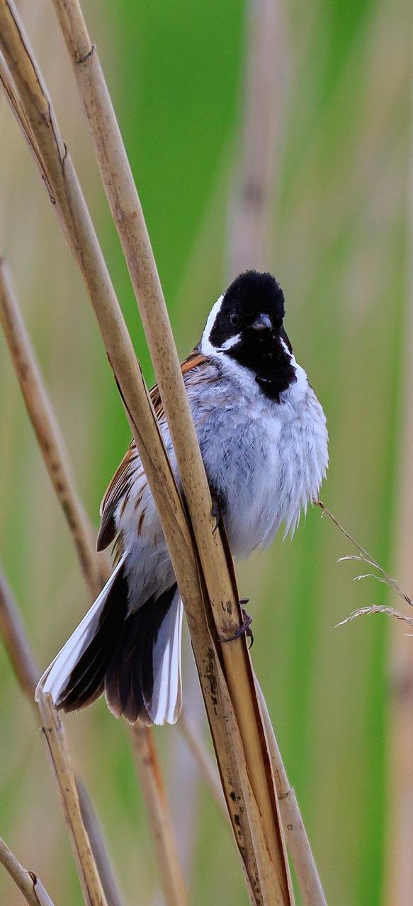 A bird at a spring lake.