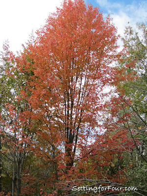 Maple Tree from Setting for Four