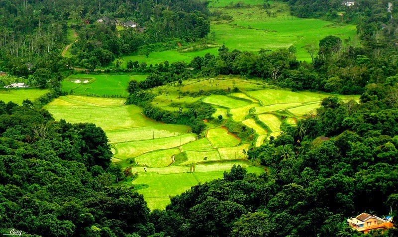 The lush landscape of Coorg