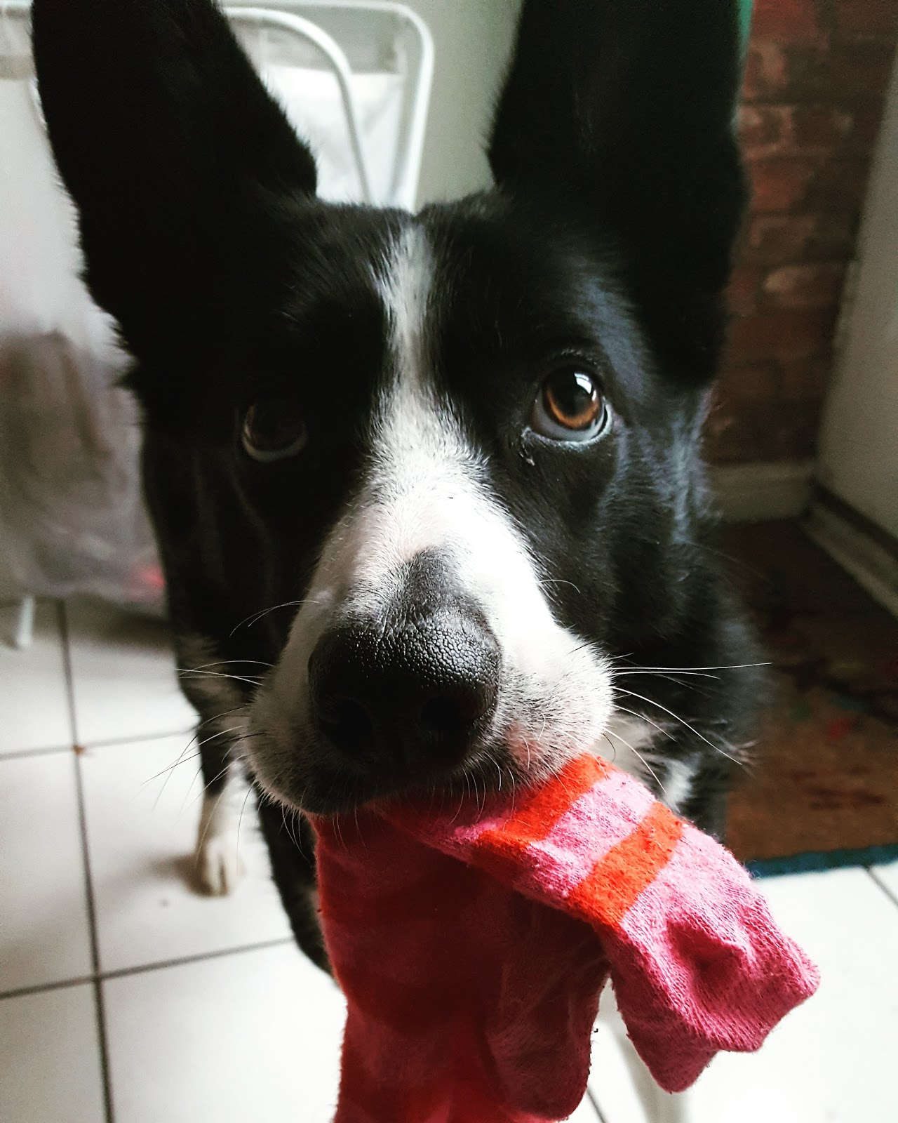 Mollie The Sock Thief