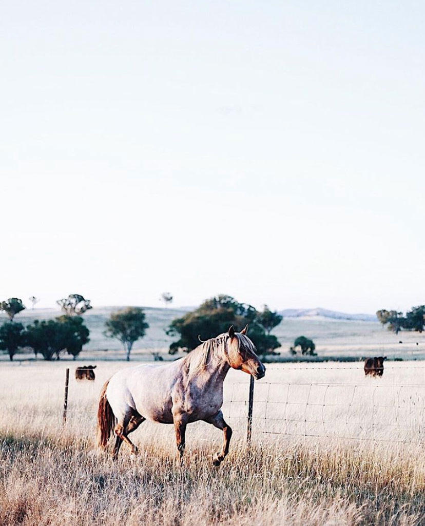 From Instagram | 10 Images With: Photographer Abbie Mellé, Southern Highlands, Australia