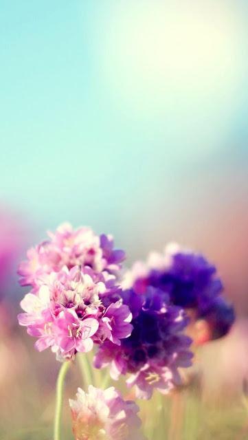 Papel De Parede Celular Flores Violeta