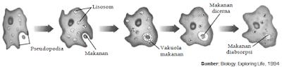 Pengertian Difusi, Osmosis, Transpor Aktif, Endositosis dan Eksositosis Dalam Proses Mekanisme Transpor Pada Sel