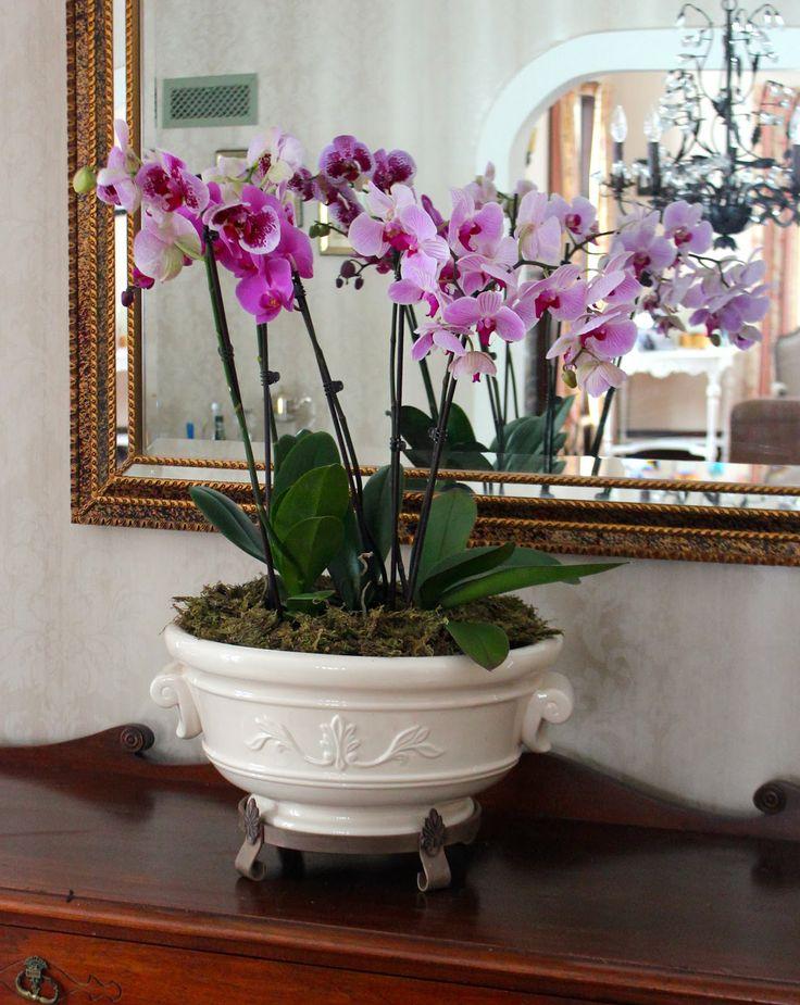 Hiasan Orkid Yang Amat Menarik Dan Kreatif Myrokan
