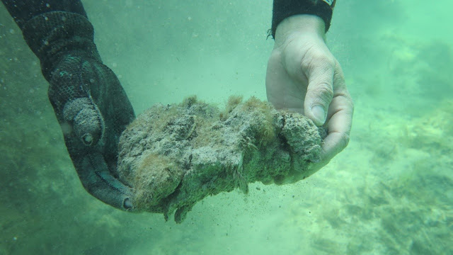 Climate change threatens world's largest seagrass carbon stores