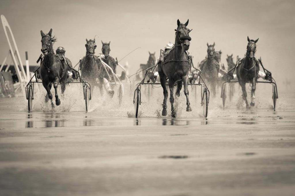 Harness Racing Tips for Newbies