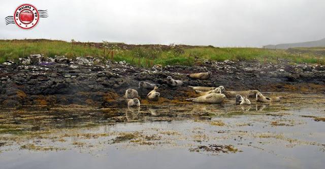 Escocia, Skye Island, focas en el castillo Dunvegan