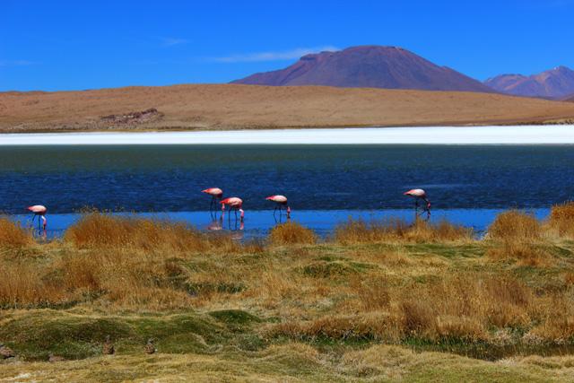 Laguna y flamencos, la pareja perfecta
