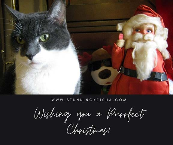 Wishing You a Purrfect Christmas!