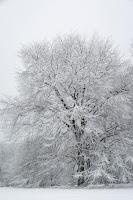 winter detroit