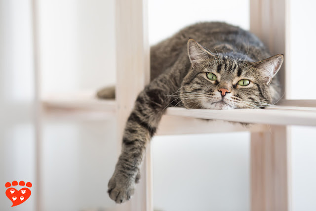 A tabby cat relaxes on a shelf
