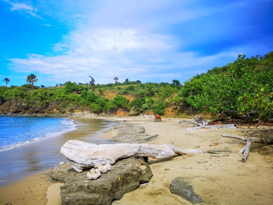 Konie na dzikiej plaży PUERTO PLATA Dominikana