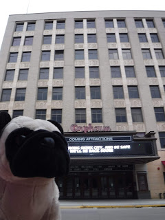 "a plush pug appears in front of a  building with 6 rows of windows above a marquee board and a sign that says ""Orpheum""."