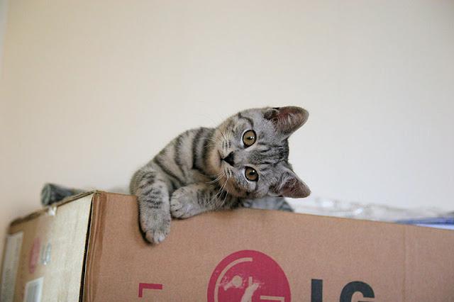 كيف أربي قطة في المنزل