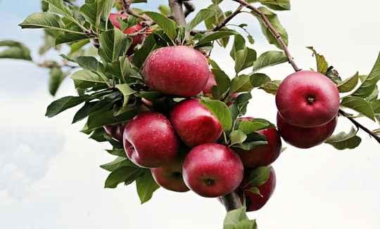 खाली पेट सेब खाने से होते हैं यह 15 बेहतरीन फायदे