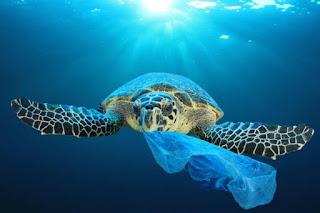Sea Turtle Eating Plastics