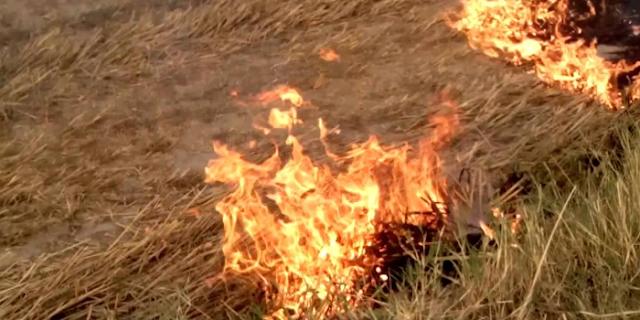 ALIRAJPUR: किसान ने डांटा तो बेटे ने पूरा खेत ही जला डाला | MP NEWS