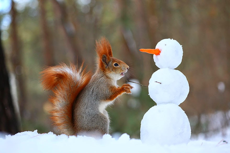 adorable squirrel photos vadim trunov-6