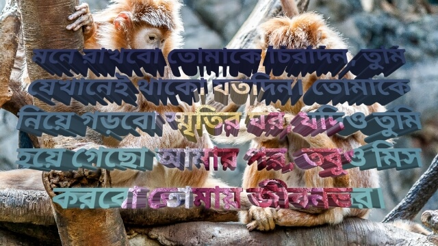 Bengali Shayari photo 2020 download