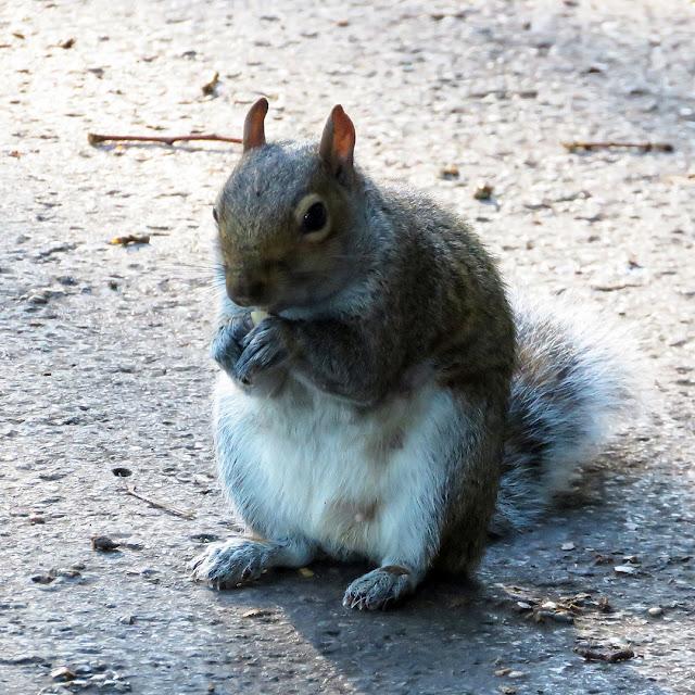 Squirrel, Hyde Park, London