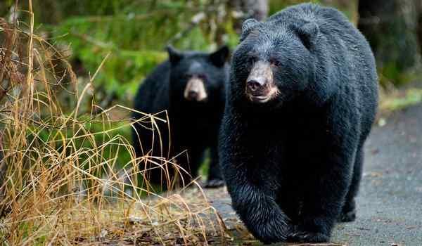 दस दिन तक पेड़ पर बैठा रहा कपल, नीचे बैठा रहा खतरनाक भालू