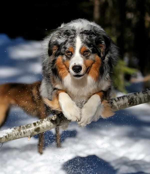 Plexidor Pet Doors Three Good Dog Training Tips