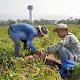 """Pepsico anuncia el programa """"Agricultura positiva"""" con nuevos objetivos globales para 2030"""