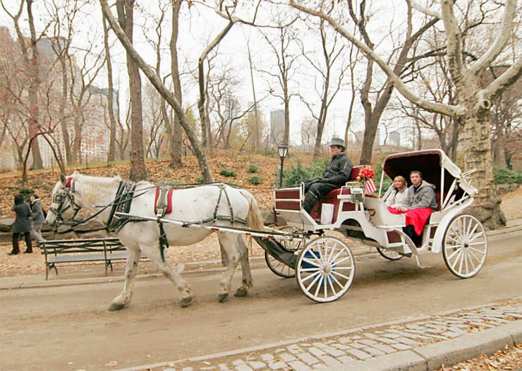 5. Carriage Ride - Top 10 Things to See and Do in Central Park, NYC
