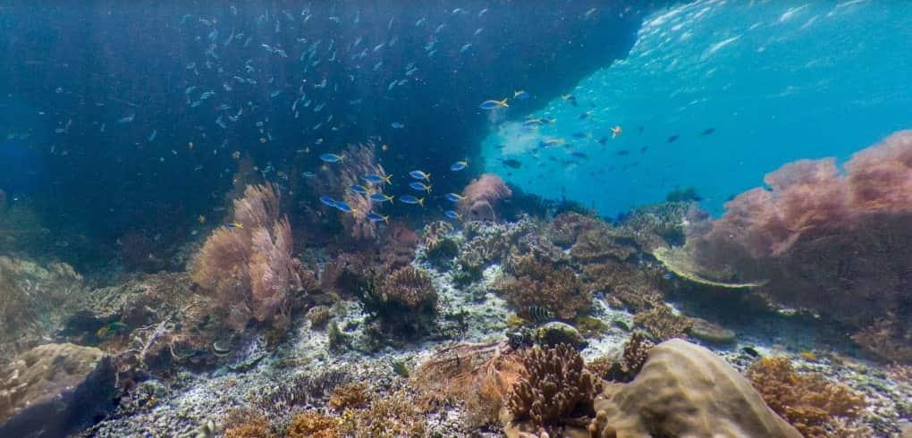 menyelam dengan street view bawah laut
