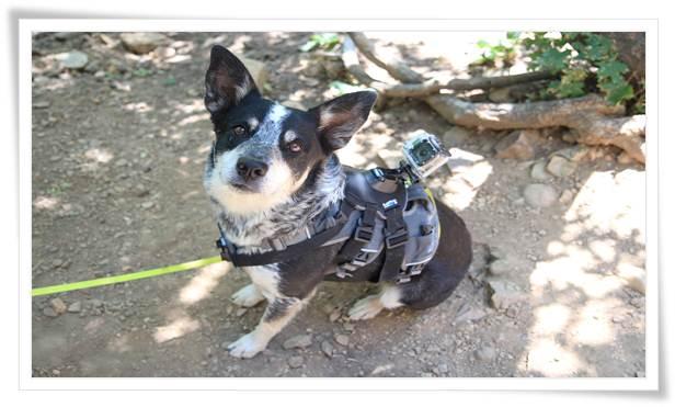 Dog Shock Collar Benefits
