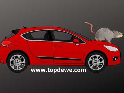 Cara mengusir tikus dari ruang mesin mobil
