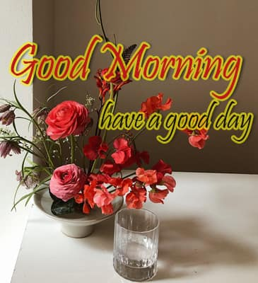 Good Morning Flowers Images Free Downloade, Good Morning Images With Flowers Hd, Good Morning Flowers Images, Good Morning Flowers Images Free Downloade HD