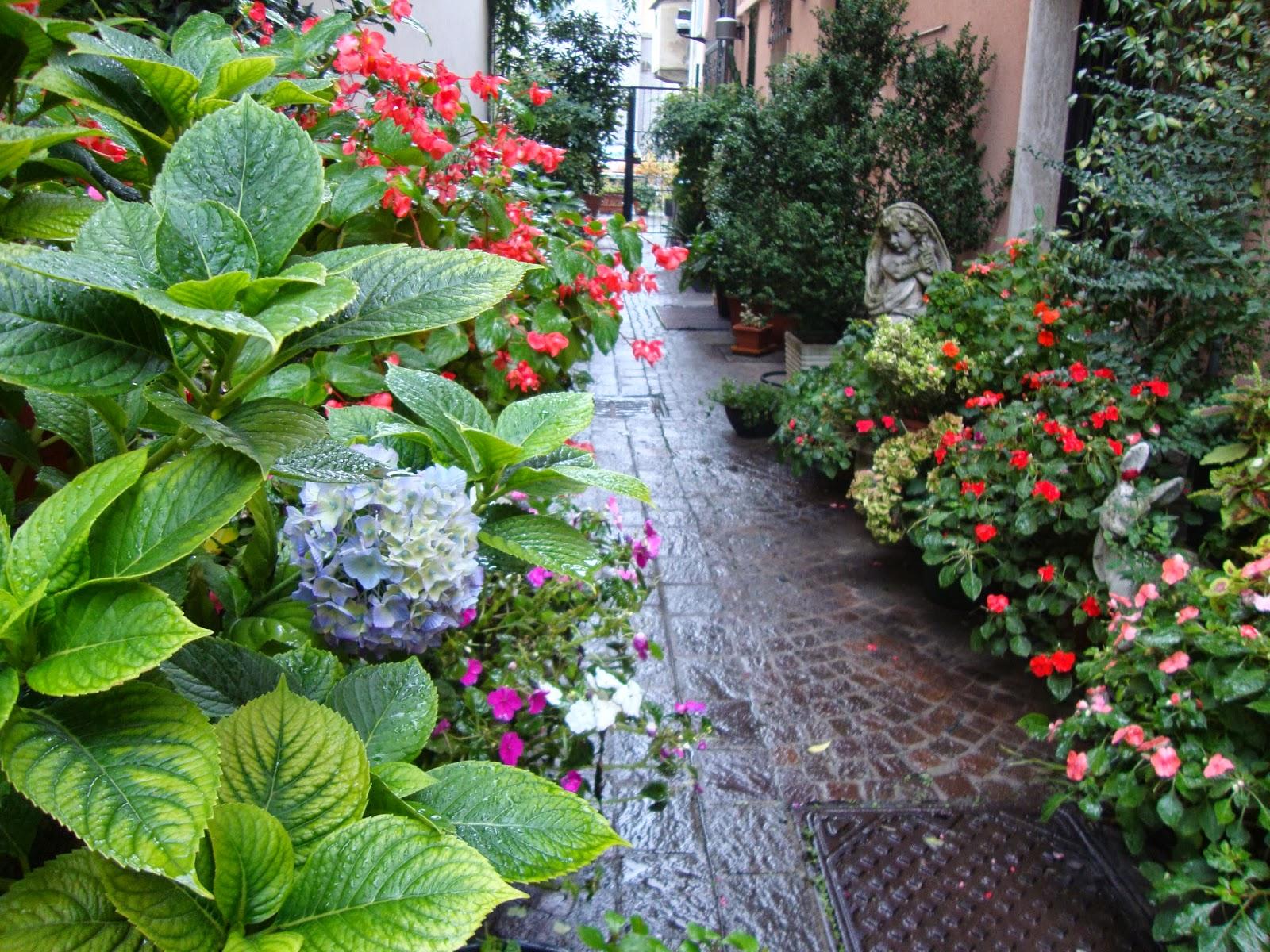Un piccolo giardino in citt l 39 autunno in un piccolo - Piccolo giardino ...