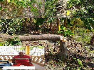 Presunto delincuente destruye finca agrícola en Cabral