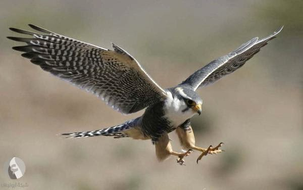طيور برية - تعليم الانجليزية بسهولة