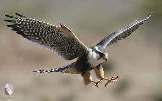 اسماء الطيور البرية بالانجليزى