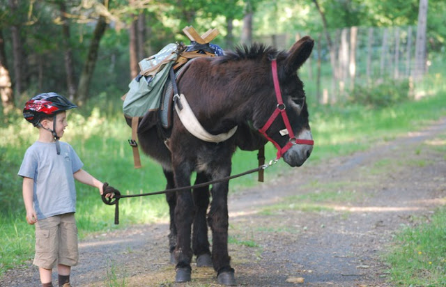 Hiking with donkeys in Loire Valley children kids