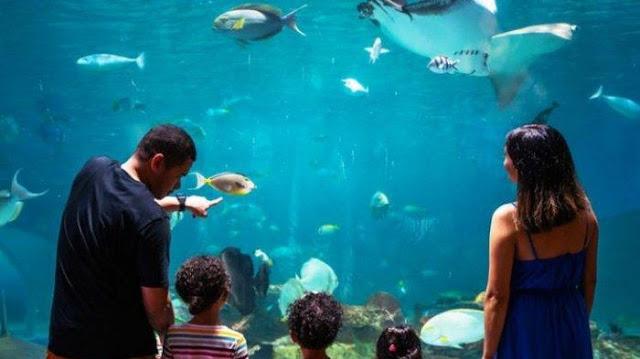 The Underwater Life in the Stunning Manila Ocean Park