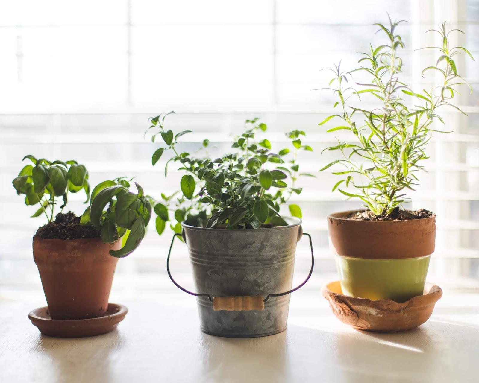 Grow Kings Blog News Tips For Starting Your Indoor Garden