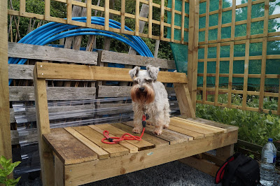 Maggie on the bench - 'growourown.blogspot.com' ~ an allotment blog