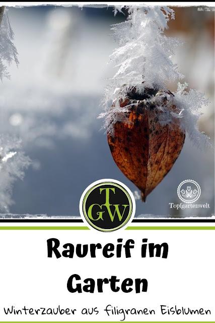 Raufreif Impressionen aus dem Garten: Gartenblog Topfgartenwelt #Winter #Raureif #Garten #Impressionen #Fotomomente #Natur
