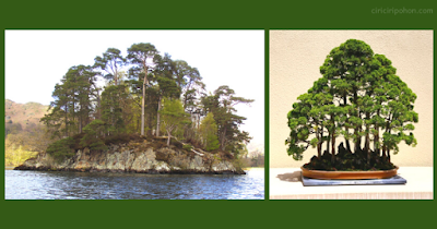 Bonsai Inspiration 7