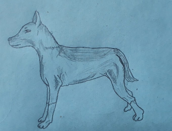 How To Draw A Realistic Dog (with Pictures & Video)