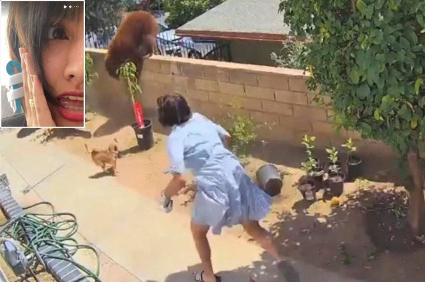 In the video .. Hailey Morenico, a teenage girl, fights a bear in order to protect her dogs An American teenager wrestled with a wild bear and pushed it over the wall of her California home after it attacked her pet dogs.