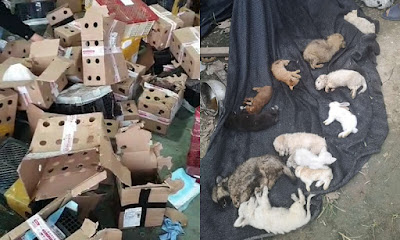 5000 PETS FOUND DEAD CHINA the end what happened 2020