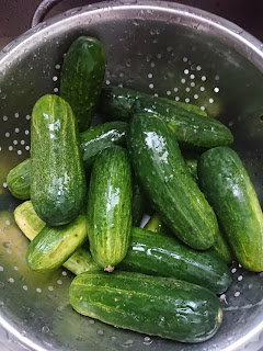 washing the pickling cucumbers