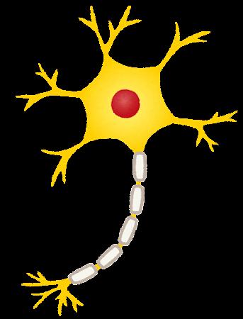 神経細胞・ニューロンのイラスト