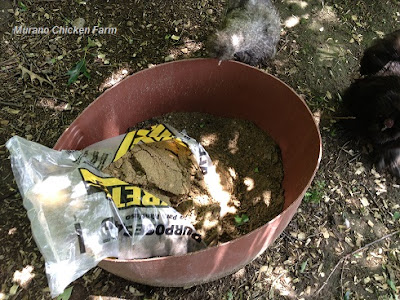 How to add sand to dust bath for chickens