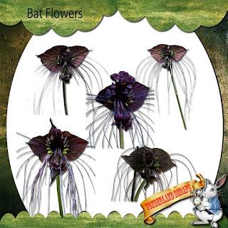 https://1.bp.blogspot.com/-pmoAq5XEVDo/XuabUbuCx3I/AAAAAAAAKrE/h_emBLLjibUborhzr1phT80Y1PnZ5U-owCLcBGAsYHQ/s320/WS_pre_bat_flowers.jpg