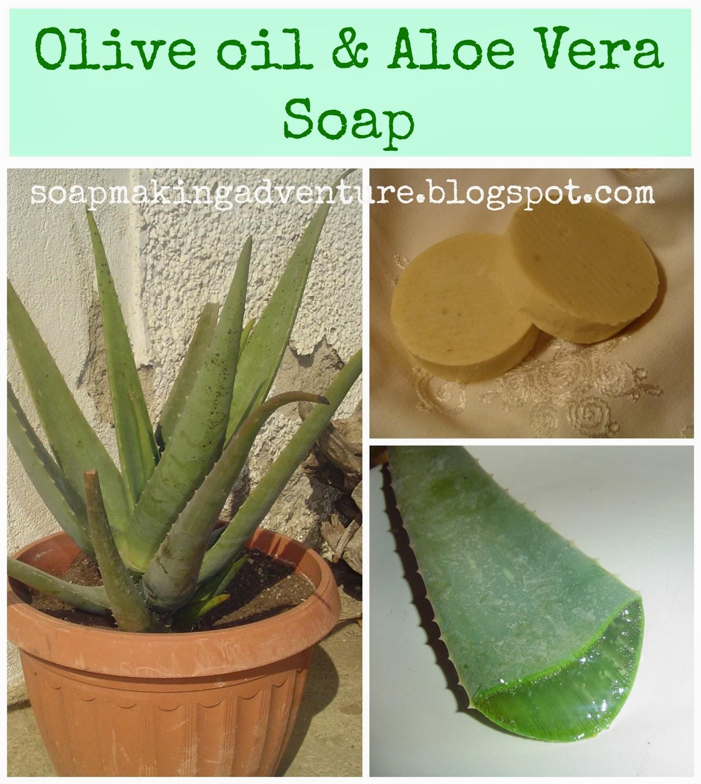 Soap Making Adventure Olive Oil Aloe Vera Soap